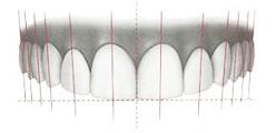 白井歯科が考える「美の基準10」